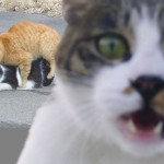 photobomb-cat-sex