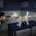 See-Through Dog