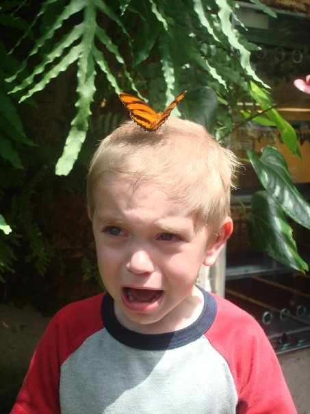 butterfly-attack