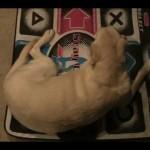 dog-time