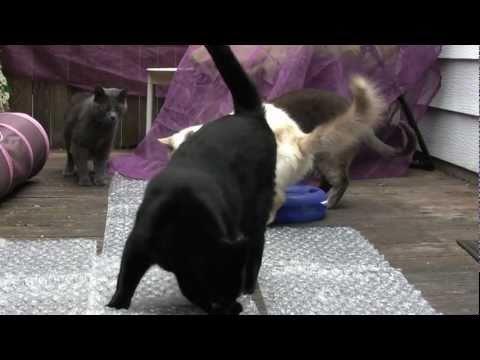 cat-bubble