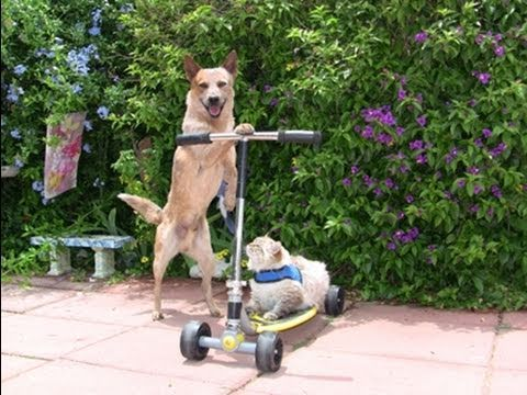 dog-cat-scooter