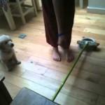 puppy-jump