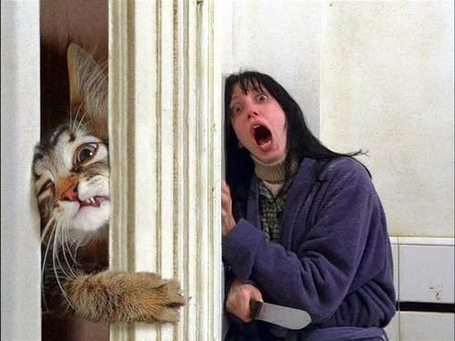 The Shining Movie Cat