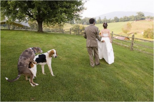 Funny Wedding Pictures photo 3458931-1