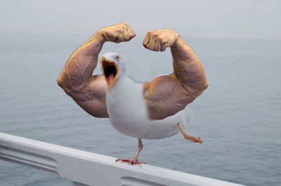 Top 10 Birds With Arms Pictures - Bro J Simpson