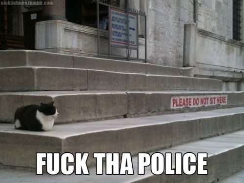 cat-fuck-the-police
