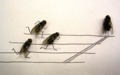 dead-flies-art-0