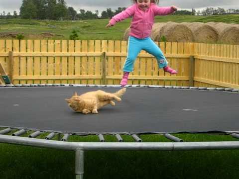 trampoline-cat