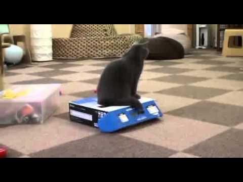 cat-bully