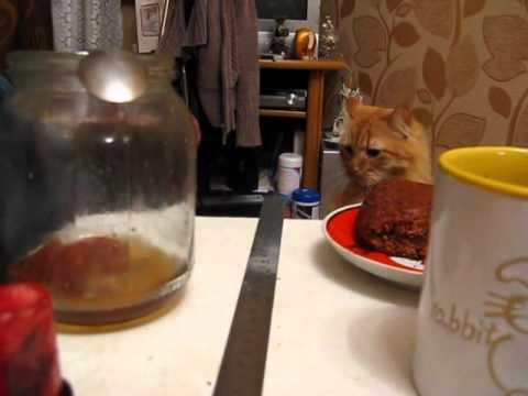 cat-vs-ruler