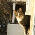 parkour-cat