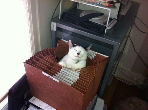 cat-filing-cabinet
