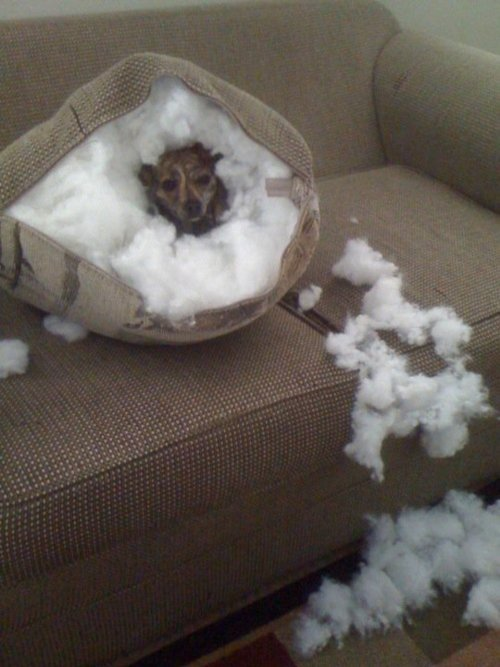 couch-bad-dog