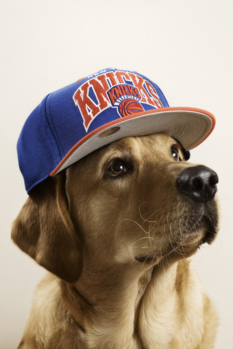 dog-knicks-hat