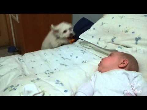 dog-to-baby