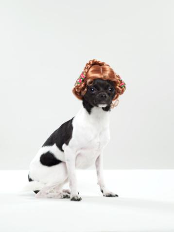 Custom essays service wig