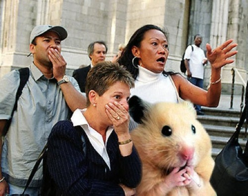 shocked-hamster
