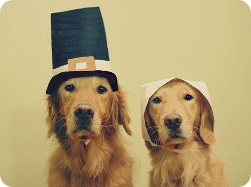 thanksgiving-dogs2