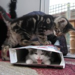 cat-cereal-box