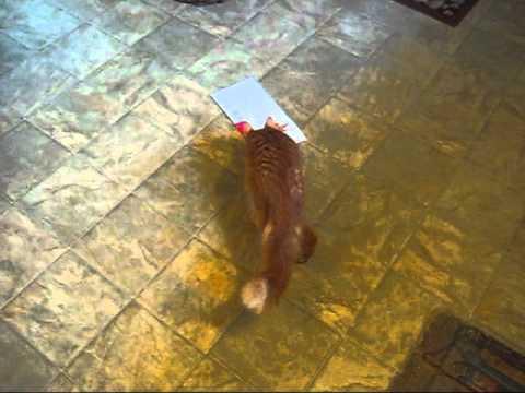 cat-hates-christmas-card