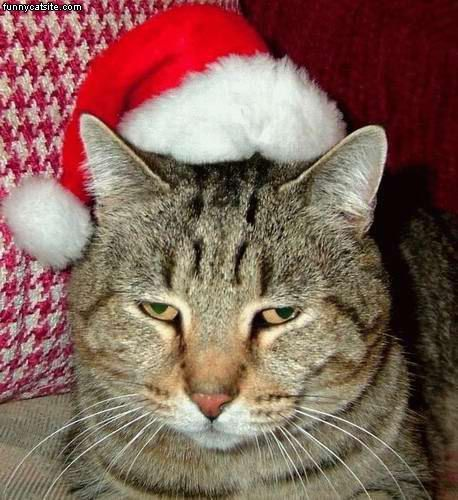 Meow J In Santa Hats Bro J Simpson