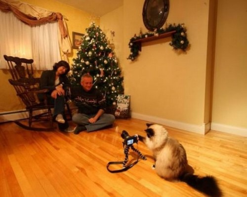 cat-takes-picture
