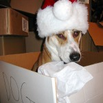 dog-box-santa-hat