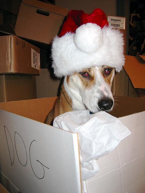 dog-box-santa-hat