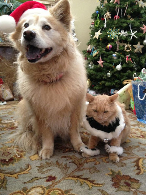dog-cat-christmas