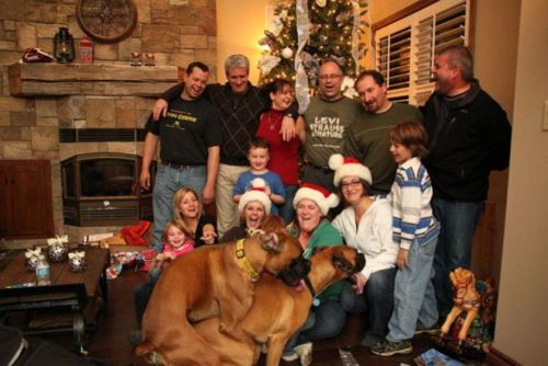 dogs-humping-xmas-family-picture