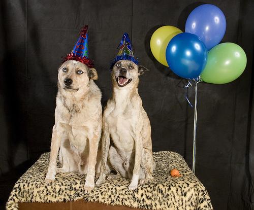 dogs-wearing-birthday-hats