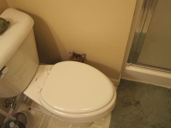hidden-cat3