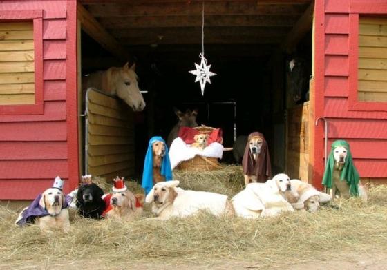 nativity-dogs