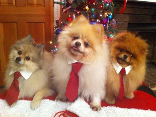 tie-dogs