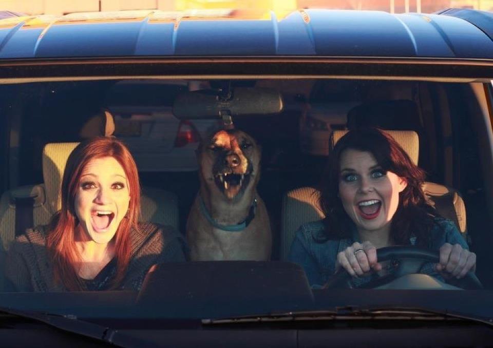 bark-j-car-sing