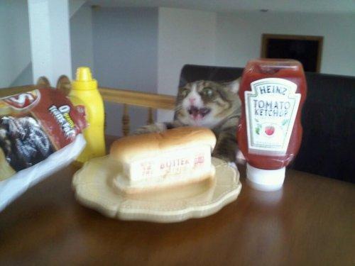 cat-want