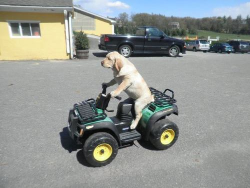 dog-farmer