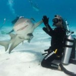high-five-shark