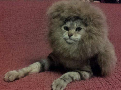 meow-lion-j