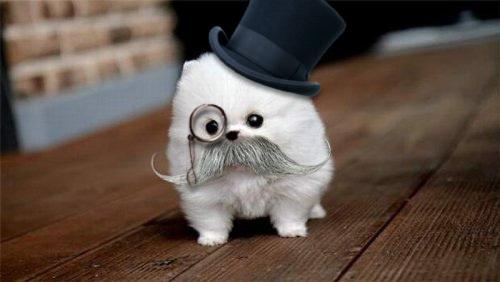 sophisticated-dog