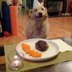 best-birthday-ever-dog