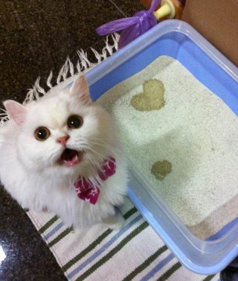 cat-pee-heart