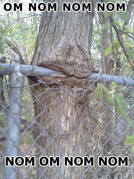 nomnom-tree