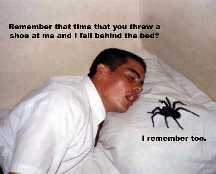 spider-remembers