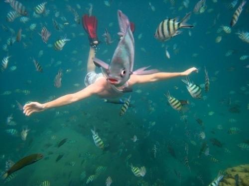 fish-snorkeler