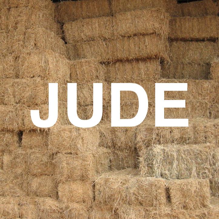 hay-jude