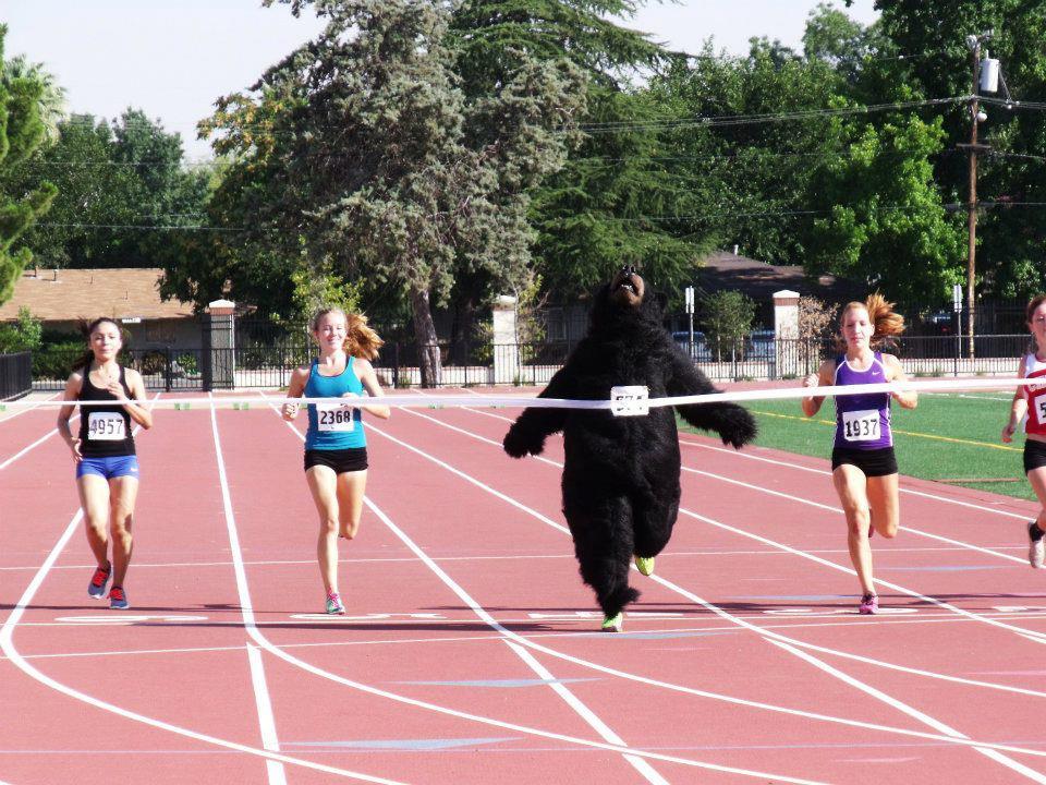bear-race