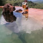 dog-beer-pool
