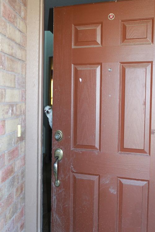 dog-door